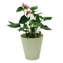 Picture of 7L FUNKtional Round Bin - Green